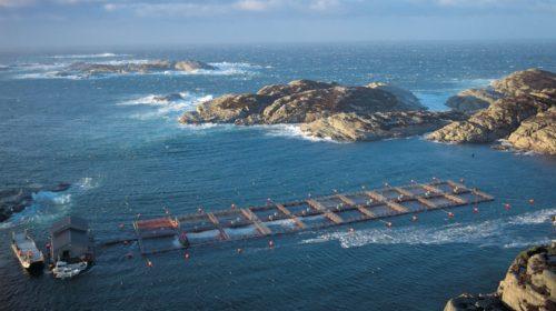 Krmiva pro ryby a hospodářská zvířata řídí cloudová řešení
